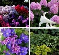 Растения весна 2021