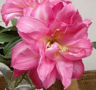 Лилиявосточная 'ДаблСюрпрайз'(Lilium oriental 'DoubleSurprise')