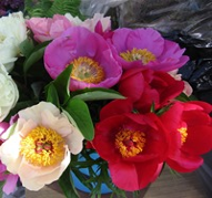 По срокам цветения